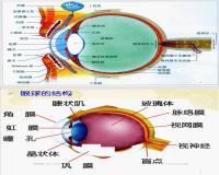 眼球的结构和功能